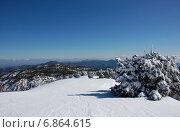Заснеженные елки на горе Олимпус, Тродос, Кипр в январе на фоне  голубого неба в ясный солнечный день (2012 год). Стоковое фото, фотограф Алтанова Елена / Фотобанк Лори