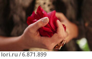 Купить «Лепестки розы в руке», видеоролик № 6871899, снято 13 декабря 2014 г. (c) Потийко Сергей / Фотобанк Лори