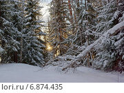 Заснеженный лес на закате. Стоковое фото, фотограф Ирина Черкашина / Фотобанк Лори