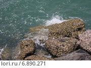 Морской берег. Стоковое фото, фотограф Alina Kizner / Фотобанк Лори