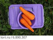 Морковь. Стоковое фото, фотограф Alina Kizner / Фотобанк Лори