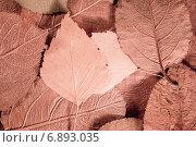 Фон из осенних листьев. Стоковое фото, фотограф Андрей Семин / Фотобанк Лори