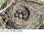 Купить «Гнездо птицы Конька лесного (Anthus trivialis)», фото № 6901603, снято 5 июня 2013 г. (c) Василий Вишневский / Фотобанк Лори