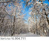 Купить «Тропинка под провисшими от снега деревьями в заснеженном лесу солнечным днем», фото № 6904711, снято 26 января 2014 г. (c) Григорий Белоногов / Фотобанк Лори