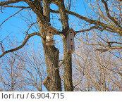 Купить «Два скворечника, одноэтажный и трехэтажный, на дереве», фото № 6904715, снято 21 марта 2014 г. (c) Григорий Белоногов / Фотобанк Лори