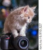 Котенок и фотоаппарат (2015 год). Редакционное фото, фотограф Эдуард Пиолий / Фотобанк Лори