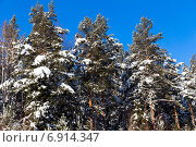 Купить «Зимний лес ярким солнечным днем», фото № 6914347, снято 2 февраля 2014 г. (c) Евгений Ткачёв / Фотобанк Лори