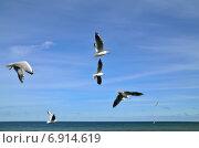 Купить «Чайки над морем», фото № 6914619, снято 21 января 2014 г. (c) Сергей Трофименко / Фотобанк Лори