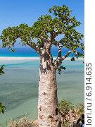 Огуречное дерево. Стоковое фото, фотограф Вадим Козуренко / Фотобанк Лори