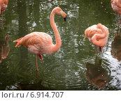 Фламинго. Стоковое фото, фотограф Евгений Питомец / Фотобанк Лори