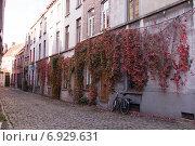 Дикий виноград на стене дома, улица в Европе. Редакционное фото, фотограф Александра Орехова / Фотобанк Лори
