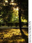 Солнечные лучи в летнем парке. Стоковое фото, фотограф Владислав Кищенко / Фотобанк Лори