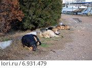 Бездомные собаки спят. Стоковое фото, фотограф Ивашков Александр / Фотобанк Лори