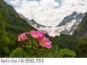 Цветок шиповника на фоне гор. Стоковое фото, фотограф Кузякин Иван / Фотобанк Лори
