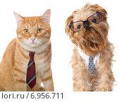 Кошка в гаостуке и собака в очках. Стоковое фото, фотограф Okssi / Фотобанк Лори
