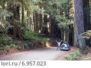 Купить «Радостный мужчина стоит рядом с машиной среди огромных деревьев - секвойи редвуд. Jedediah Smith Redwoods State Park, Howland Hill Road, Калифорния, США», фото № 6957023, снято 2 января 2015 г. (c) Ирина Кожемякина / Фотобанк Лори