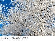 Купить «Ветки дерева в инее», фото № 6960427, снято 22 января 2015 г. (c) Володина Ольга / Фотобанк Лори