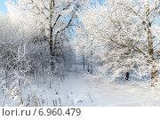 Купить «Красивый зимний лес на фоне голубого неба», фото № 6960479, снято 22 января 2015 г. (c) Володина Ольга / Фотобанк Лори