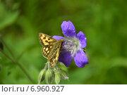 Труд бабочки. Стоковое фото, фотограф Евгений Брызгалов / Фотобанк Лори