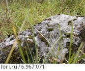 Камень в густой траве. Стоковое фото, фотограф Алексей Беляев / Фотобанк Лори