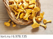 Купить «Cantharellus cibarius, commonly known as the chanterelle, golden chanterelle or girolle. Mushrooms in wicker basket.», фото № 6978135, снято 14 декабря 2019 г. (c) BE&W Photo / Фотобанк Лори
