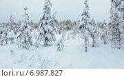 Купить «Заснеженные деревья на болоте в зимнее время года. Карелия», видеоролик № 6987827, снято 12 января 2015 г. (c) Кекяляйнен Андрей / Фотобанк Лори