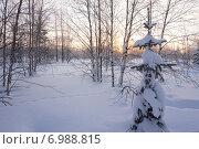 Купить «Зимний пейзаж на закате», фото № 6988815, снято 8 февраля 2015 г. (c) Николай Белецкий / Фотобанк Лори