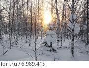 Купить «Пейзаж. зимний лес», фото № 6989415, снято 8 февраля 2015 г. (c) Николай Белецкий / Фотобанк Лори