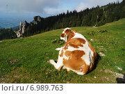 Коровы на альпийских лугах Баварии (2014 год). Редакционное фото, фотограф Юлия Алексеева / Фотобанк Лори