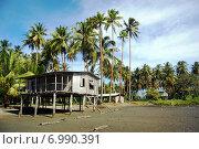 Хижина на сваях под пальмами, Папуа-Новая Гвинея (2011 год). Стоковое фото, фотограф Daniil Nasonov / Фотобанк Лори