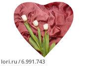 Три белых тюльпана в розовом сердце. Стоковое фото, фотограф Екатерина Ярославовна Мостовая / Фотобанк Лори