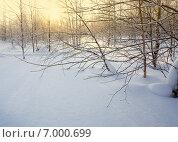 Купить «Зимний лес на закате», фото № 7000699, снято 9 февраля 2015 г. (c) Николай Белецкий / Фотобанк Лори