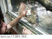 Полосатый варан (Water monitor) здоровается с посетителем зоопарка города Хошимин (Сайгонский зоопарк) (2014 год). Редакционное фото, фотограф Ольга Кирсанова / Фотобанк Лори