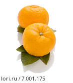 Плоды Юдзу, известного за свой аромат. Стоковое фото, фотограф Алексей Копытько / Фотобанк Лори