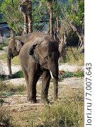 Слоны на территории сафари-парка (Hua Hin Safari & Adventure Park) в  Хуахине, Таиланд (2015 год). Стоковое фото, фотограф Natalya Sidorova / Фотобанк Лори