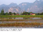 Купить «Рисовое поле в Утхайтхани, Таиланд», фото № 7007727, снято 22 января 2015 г. (c) Natalya Sidorova / Фотобанк Лори
