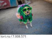 Собачка в костюме. Стоковое фото, фотограф Artem Kotelnikov / Фотобанк Лори