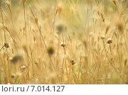 Высохшая степная растительность. Стоковое фото, фотограф Михаил Бессмертный / Фотобанк Лори