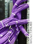 Купить «Пучки фиолетовых utp кабелей», фото № 7016403, снято 16 января 2019 г. (c) Mikhail Starodubov / Фотобанк Лори