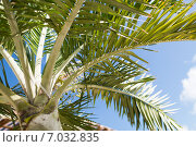 Купить «palm tree over blue sky with white clouds», фото № 7032835, снято 12 февраля 2014 г. (c) Syda Productions / Фотобанк Лори