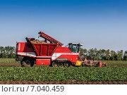Купить «Уборка сахарной свеклы», фото № 7040459, снято 28 сентября 2012 г. (c) Ольга Сейфутдинова / Фотобанк Лори