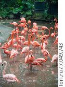 Купить «Flamingo birds in the pond», фото № 7049743, снято 3 августа 2014 г. (c) Elnur / Фотобанк Лори