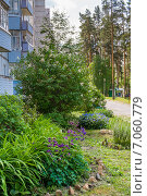 Купить «Растения на газоне между подъездами панельной многоэтажки», фото № 7060779, снято 4 июня 2014 г. (c) Александр Цуркан / Фотобанк Лори