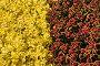 Цветочно-растительный фон, эксклюзивное фото № 7065575, снято 6 октября 2013 г. (c) Юрий Морозов / Фотобанк Лори