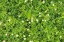 Цветочно-растительный фон, эксклюзивное фото № 7065579, снято 6 октября 2013 г. (c) Юрий Морозов / Фотобанк Лори