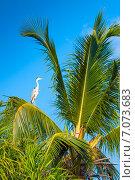 Купить «Мальдивы, на ветке пальмы сидит серая цапля (grey heron, Ardea cinerea)», фото № 7073683, снято 5 февраля 2013 г. (c) Сергей Дубров / Фотобанк Лори
