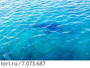Купить «Силуэт китовой акулы в воде на небольшой глубине», фото № 7073687, снято 8 февраля 2013 г. (c) Сергей Дубров / Фотобанк Лори