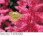Бабочка. Стоковое фото, фотограф Лия / Фотобанк Лори