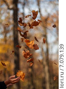 Девушка подбрасывает листья. Стоковое фото, фотограф Ольга Коркина / Фотобанк Лори