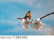 Бабочка на цветущем дереве. Стоковое фото, фотограф Metzlof / Фотобанк Лори